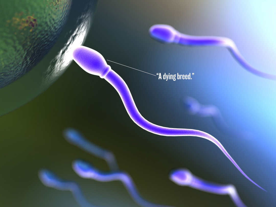 why is sperm white or clear