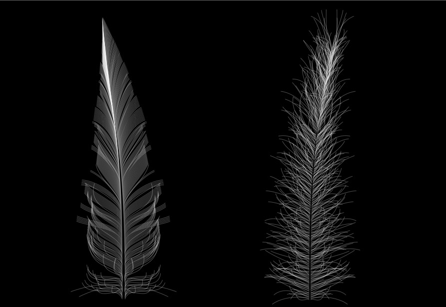 feather2 The Online Feather Generator: Design Your Own Feathers From Flighters To Fluffies