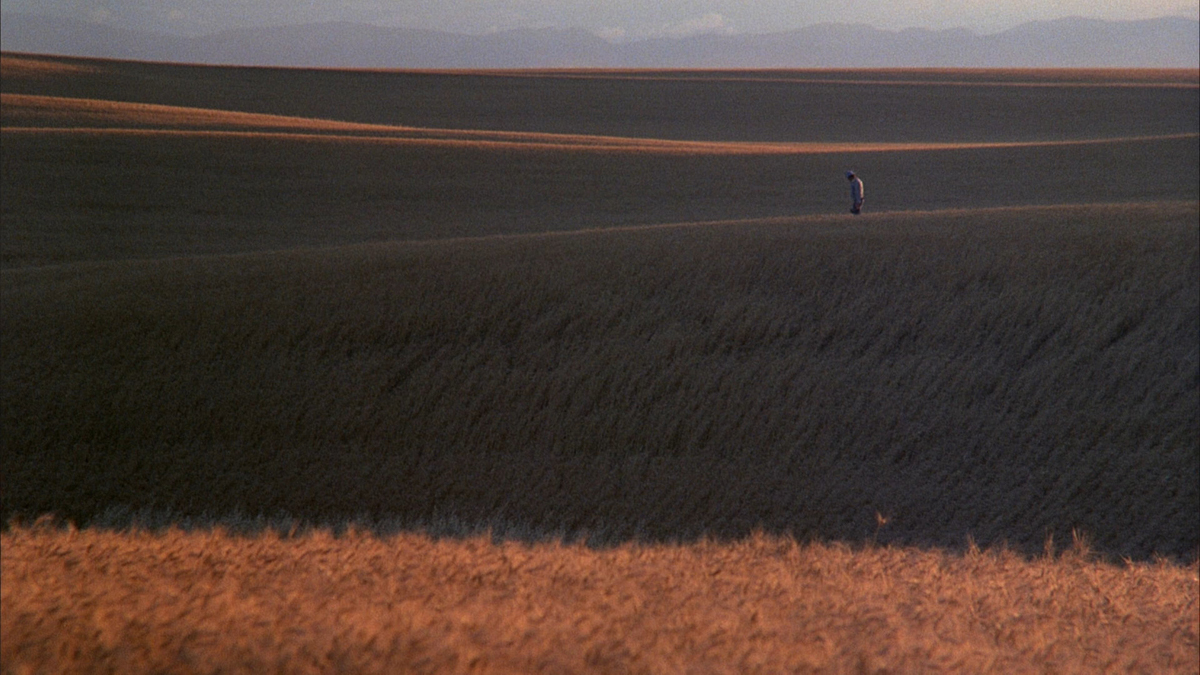 DaysHeaven8 The Backstory Of The Principle Photography For Terrence Malicks 1978 Epic Days Of Heaven