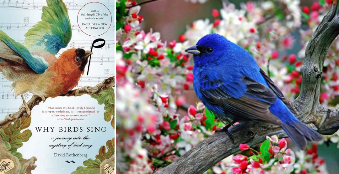 NewBanner114pic2 Banner Photo #114: Philosopher & Jazz Musician David Rothenbergs Fascinating Book Why Birds Sing