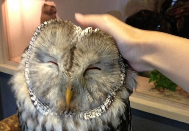 OwlCafe1