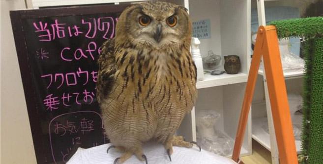 OwlCafe10