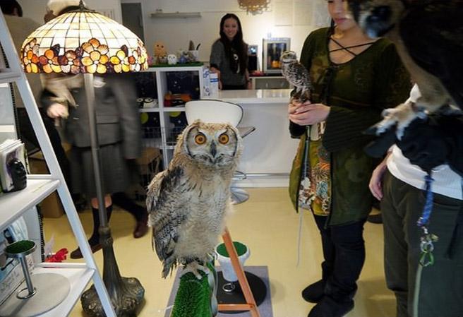 OwlCafe12