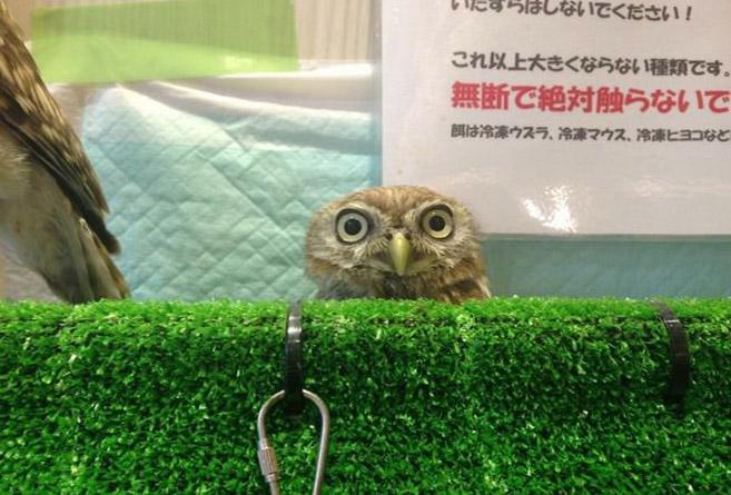 OwlCafe13