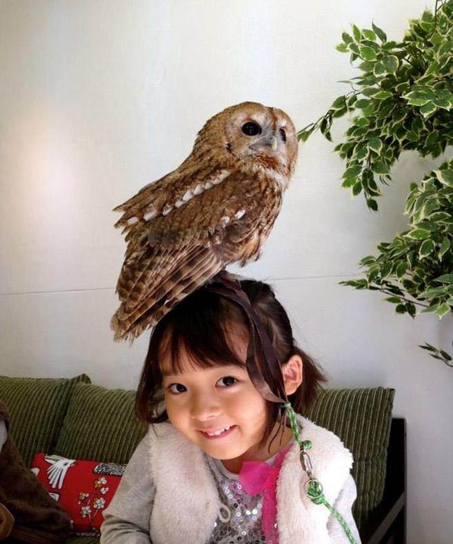 OwlCafe6