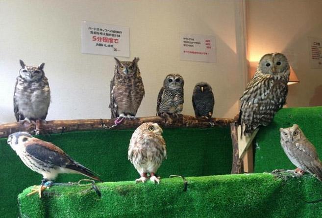 OwlCafe9