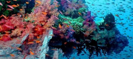 Corals point into current flow.tif