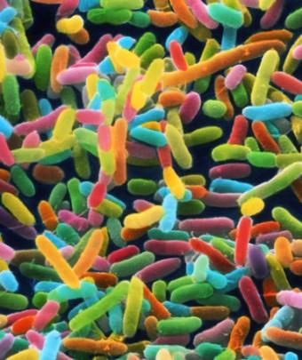 MicrobiomeSA