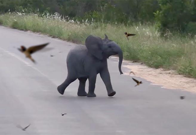 ElephantBirds