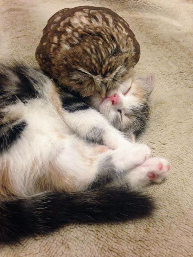 KittenOwl2