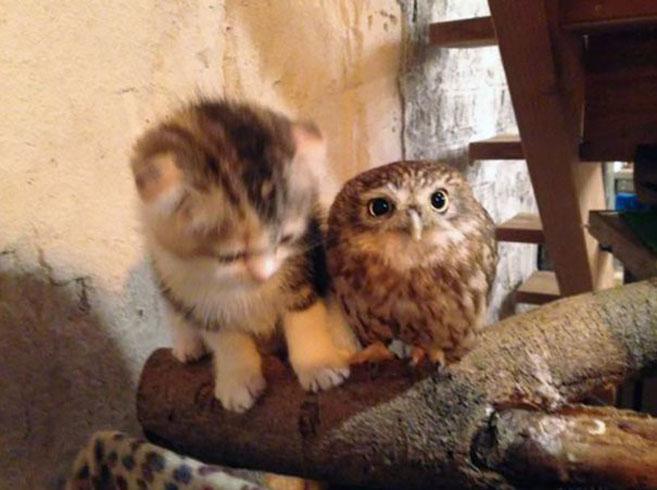 KittenOwl3