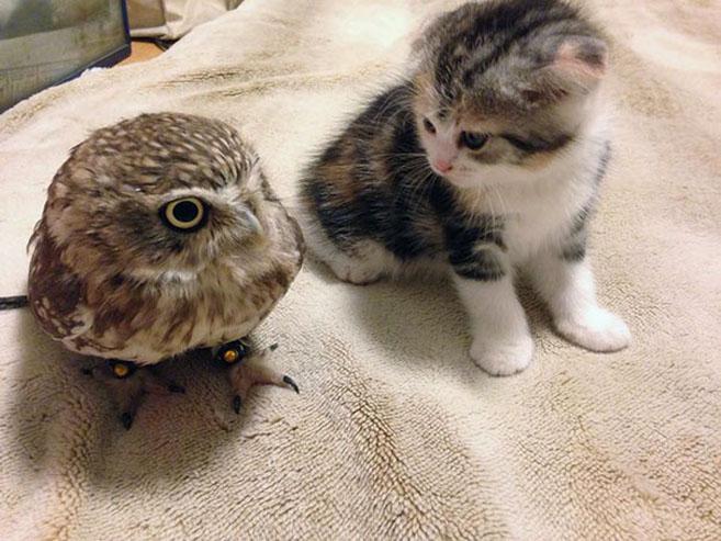 KittenOwl4
