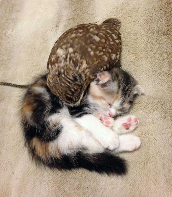 KittenOwl6