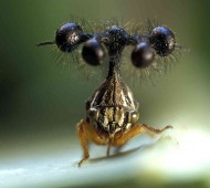 Treehopper0