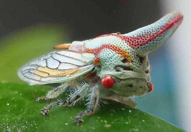 Treehopper17