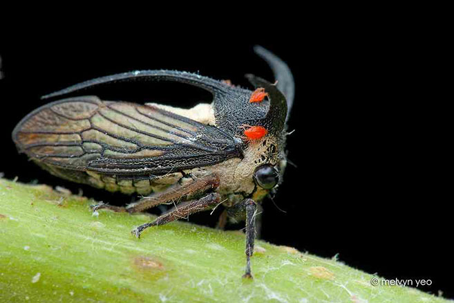 Treehopper5
