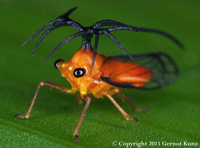 Treehopper6