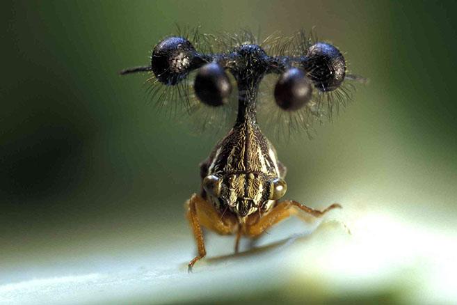 Treehopper7
