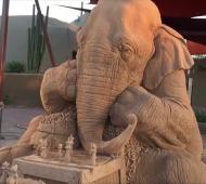 Elephant0