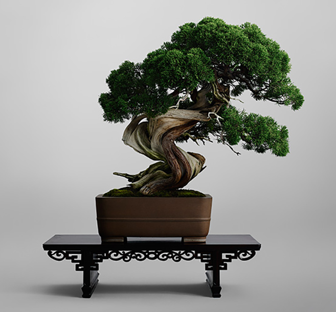 the forest of rainbow trees world 39 s most expensive bonsai