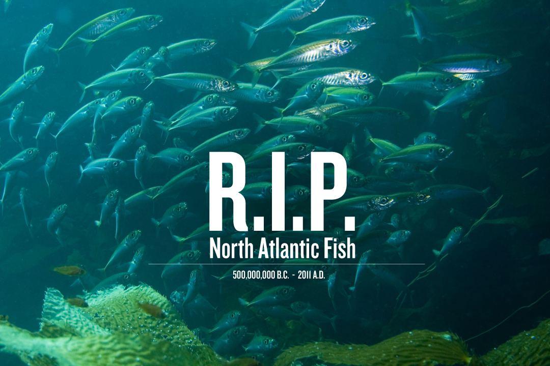 North atlantic fish are officially extinct for Atlantic game fish