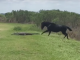 Horse Attacks Alligator In Florida State Park